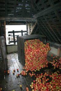 stockage de pommes dans le grenier cambremer