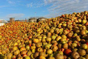 cambremer stock de pommes