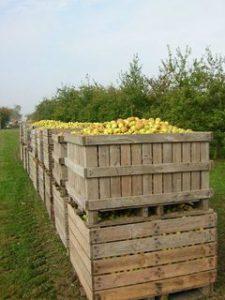palox de pommes Cambremer